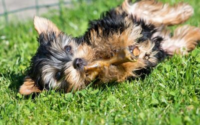 Human foods that are healthy for your dog