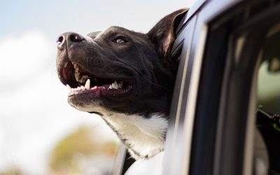 Tips to help your dog live longer