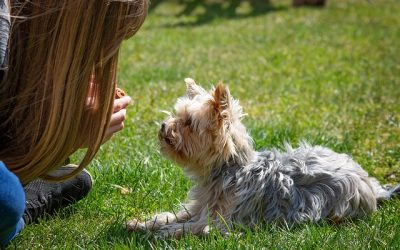 4 vital teaching lesson for your new puppy