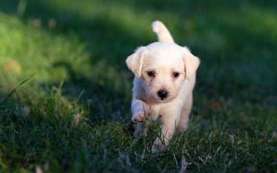 How to take care of a puppy?